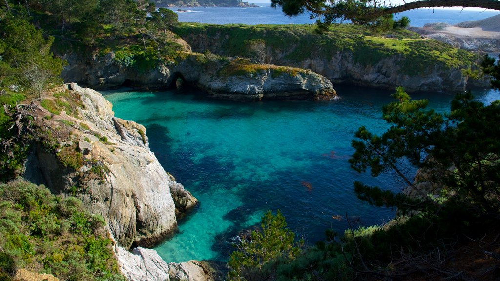 Point Lobos State Reserve showing rugged coastline and general coastal views