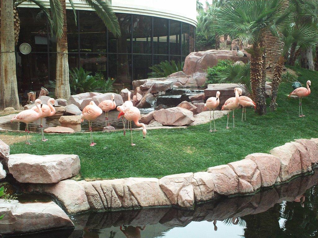 1440px-Flamingos_at_Flamingo.jfif?1575295556