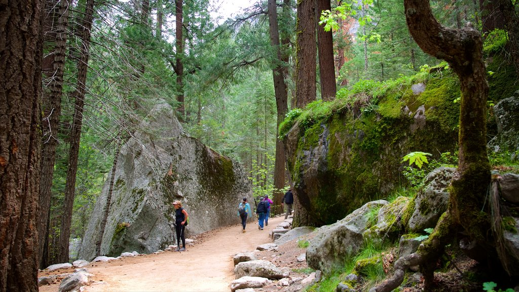 Mist Trail which includes hiking or walking and forests as well as a small group of people