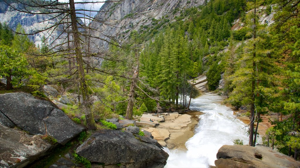 Yosemite National Park which includes tranquil scenes, a river or creek and forest scenes