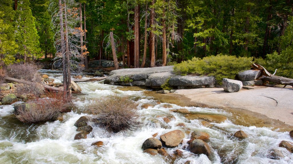 Yosemite National Park showing a river or creek and forest scenes