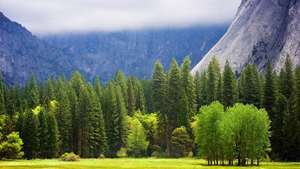 Yosemite National Park showing forest scenes and tranquil scenes