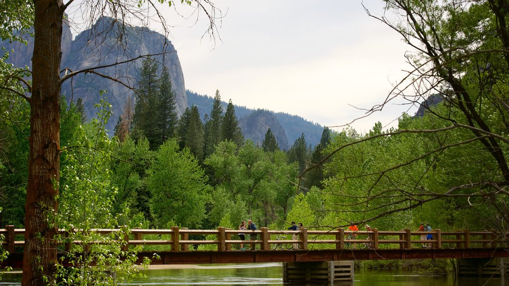 Yosemite National Park which includes a bridge, tranquil scenes and forest scenes