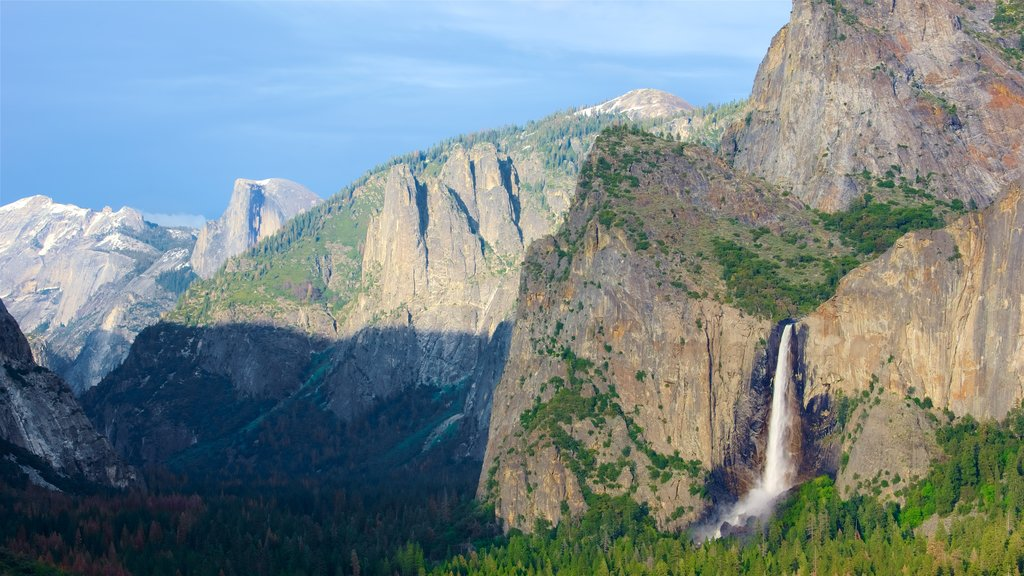 Bridalveil Falls featuring mountains, forest scenes and a waterfall