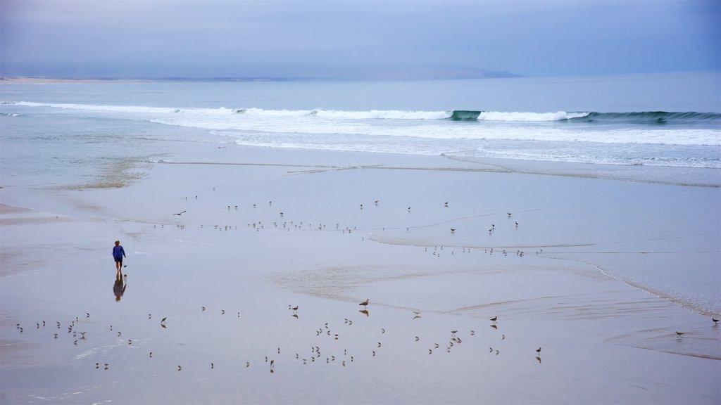 Pismo Beach showing a sandy beach, surf and general coastal views