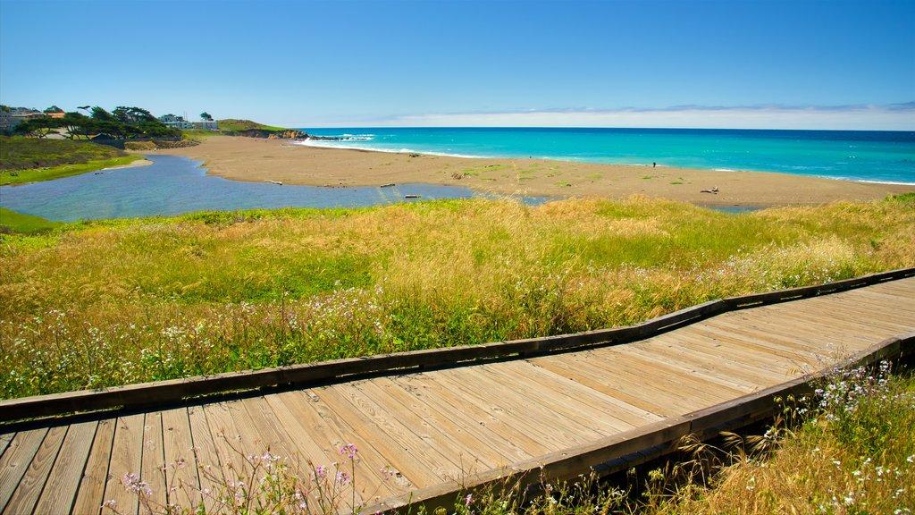 Moonstone Beach Park which includes a sandy beach and a park