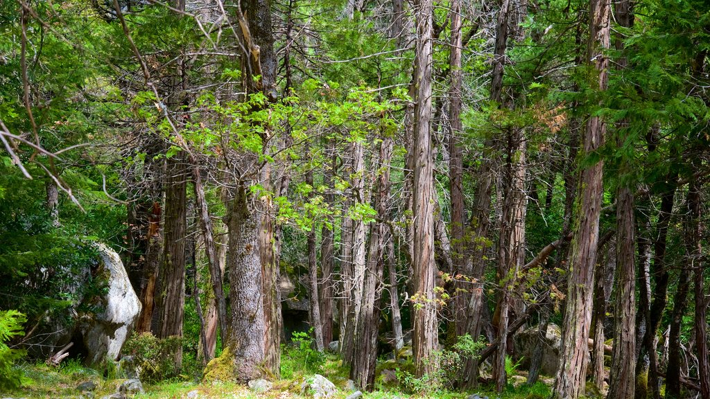 Bridalveil Falls showing forest scenes