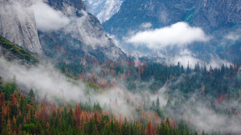 Tunnel View featuring forest scenes and mist or fog