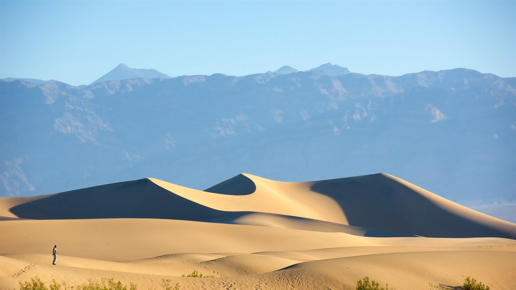 Mesquite Flat Sand Dunes featuring desert views and landscape views