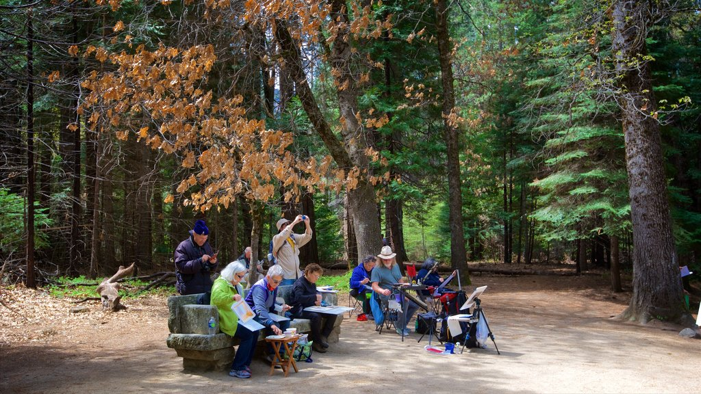 Lower Yosemite Falls showing forest scenes and picnicing as well as a small group of people