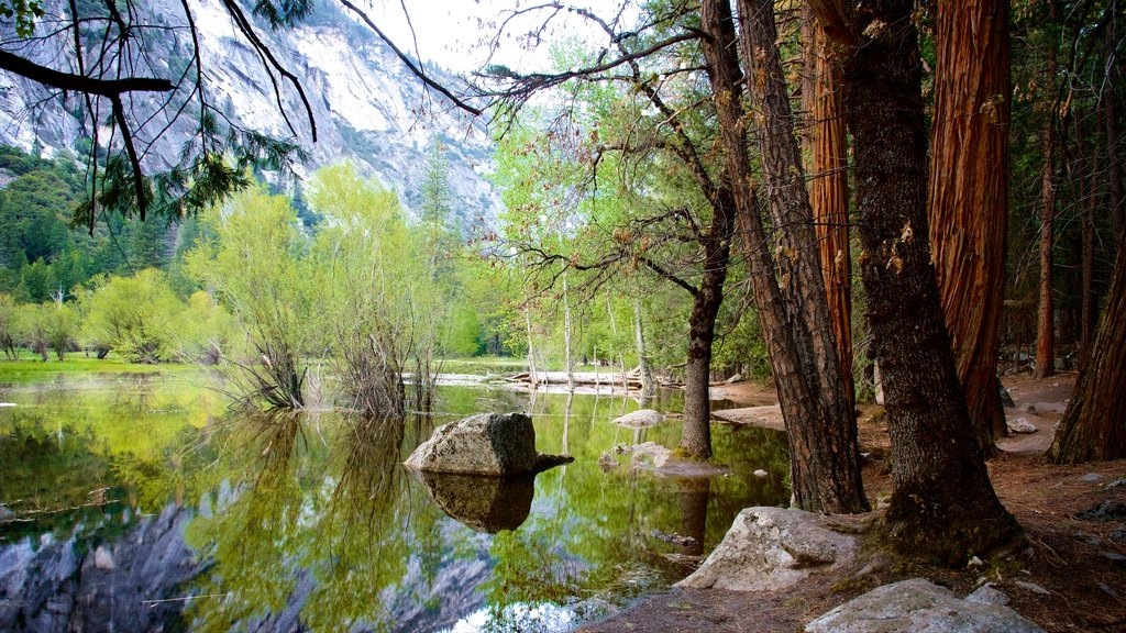 Yosemite National Park showing a lake or waterhole and forest scenes