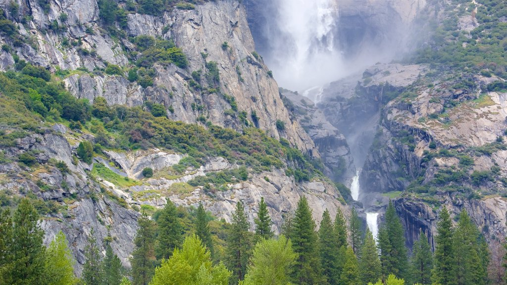 Yosemite National Park featuring a waterfall and tranquil scenes