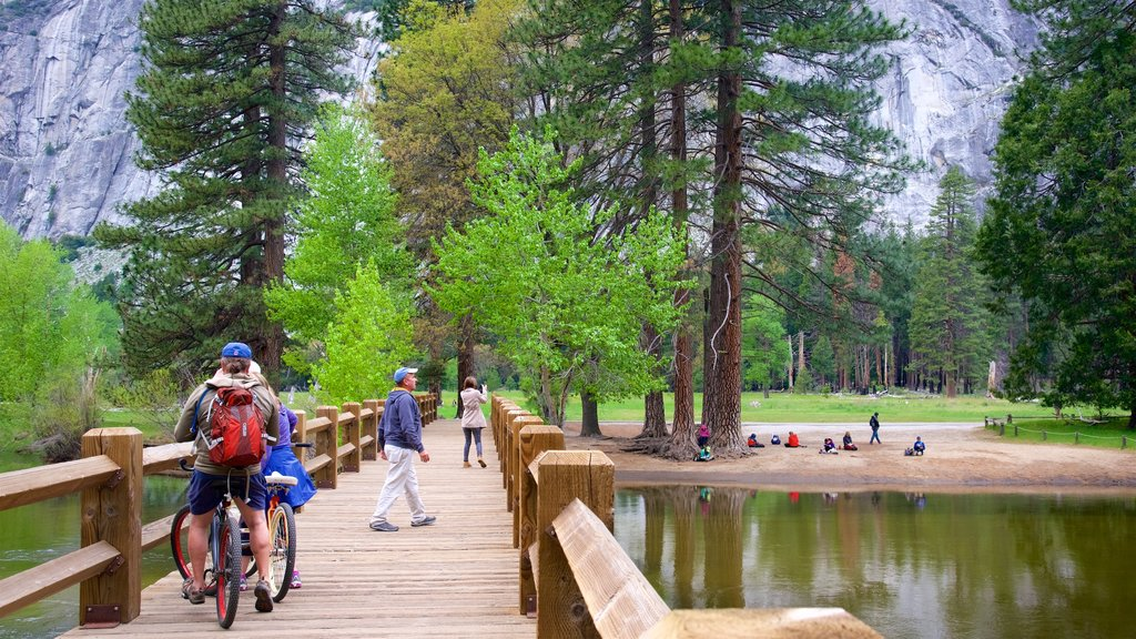 Yosemite National Park featuring forests, a bridge and cycling
