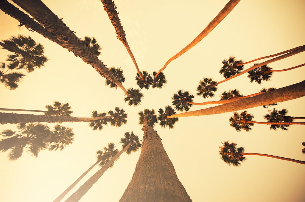 Looking up at palm trees across the sky in Los Angeles