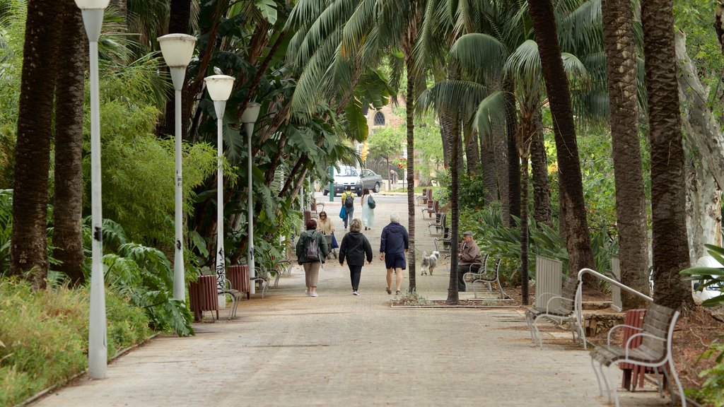 Tajo\'s Tree-Lined Avenue showing a garden as well as a small group of people
