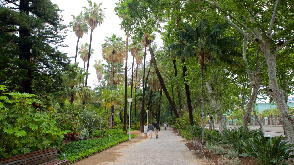 Tajo\'s Tree-Lined Avenue featuring a garden