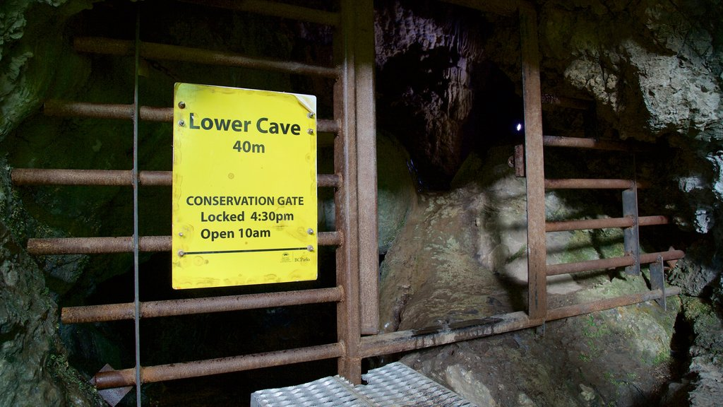 Horne Lake Caves Provincial Park featuring signage and caving