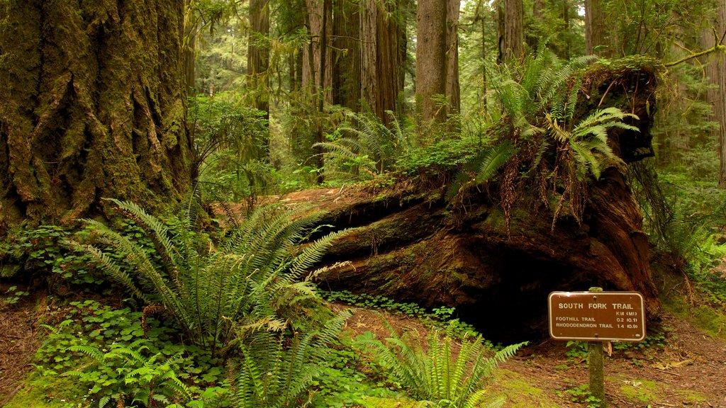Parque nacional y parques estatales de Redwood que incluye señalización y escenas forestales