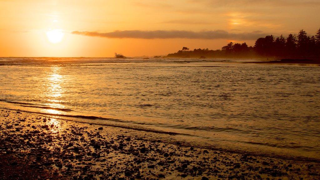 Parque nacional y parques estatales de Redwood mostrando una puesta de sol y vistas generales de la costa