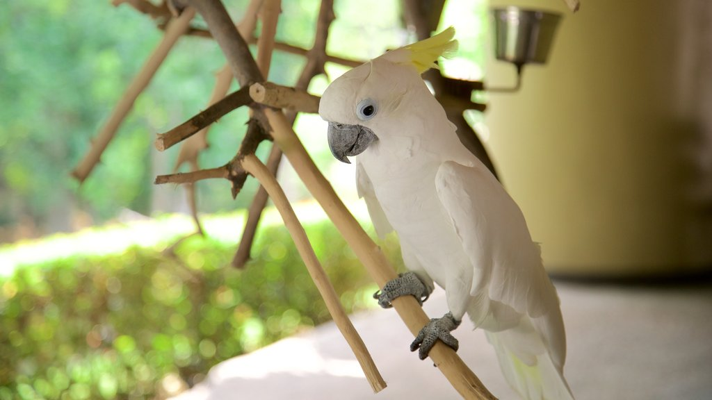 Villahermosa which includes bird life