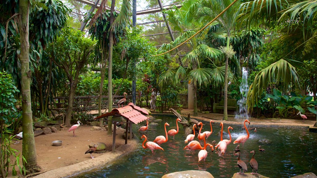 Villahermosa which includes interior views, bird life and a pond