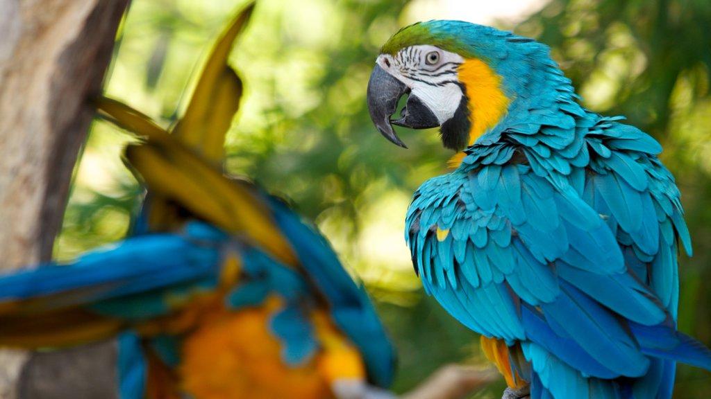 Parque zoológico de Santa Ana ofreciendo animales del zoológico, vida de las aves y vistas de paisajes
