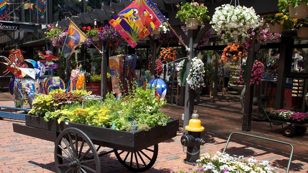 Boston que incluye flores