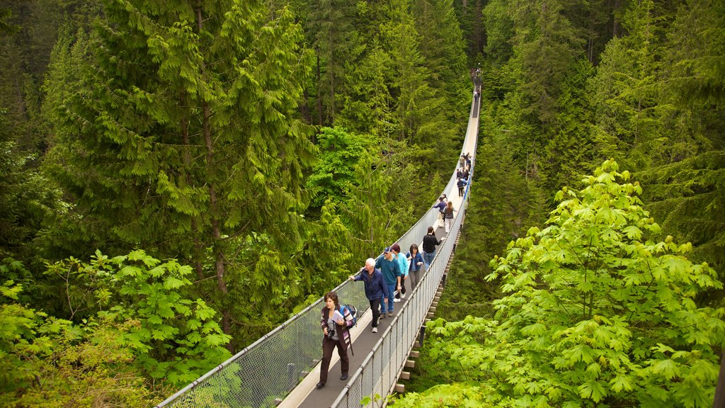 Capilano Suspension Bridge featuring hiking or walking, a suspension bridge or treetop walkway and landscape views