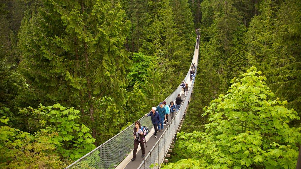 Puente de suspensión Capilano mostrando senderismo o caminata, bosques y vistas de paisajes