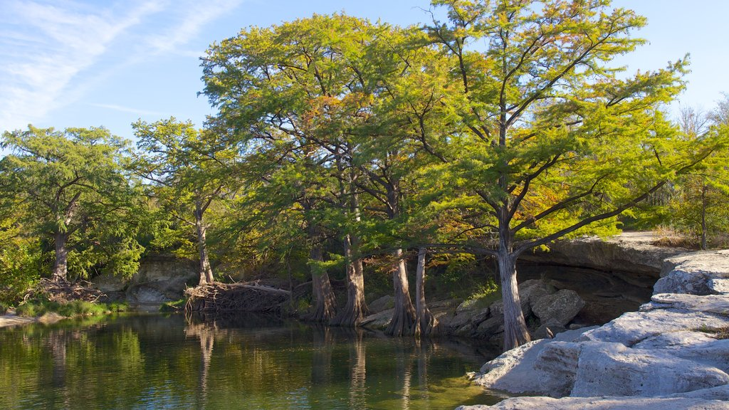 McKinney Falls State Park showing forest scenes, landscape views and a lake or waterhole