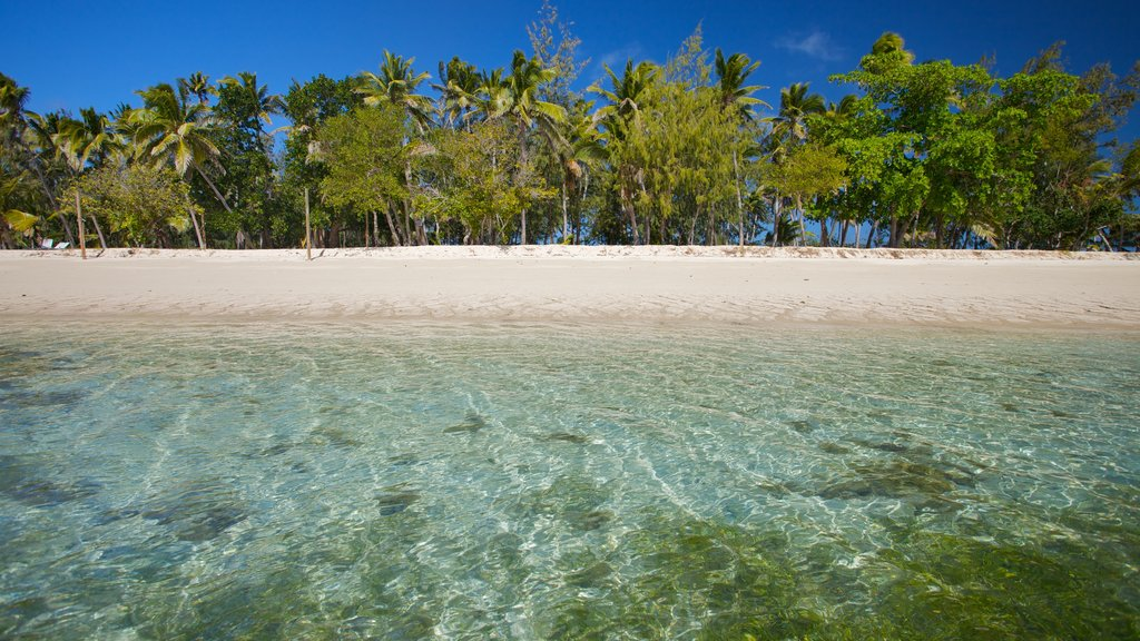 Yasawa Islands which includes a sandy beach, island images and tropical scenes