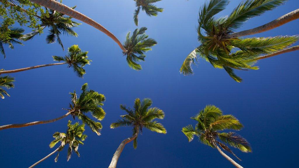 Coral Coast featuring tropical scenes