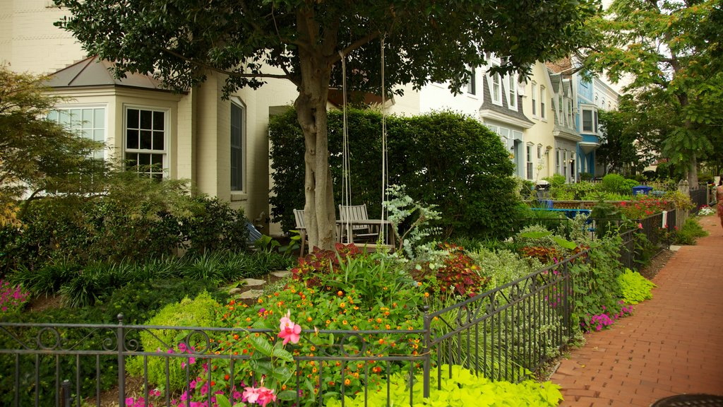 Georgetown - Foggy Bottom which includes a house, a city and flowers