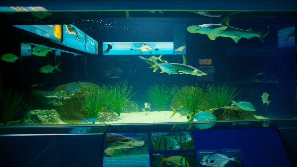 San Antonio que incluye vida marina y vistas interiores