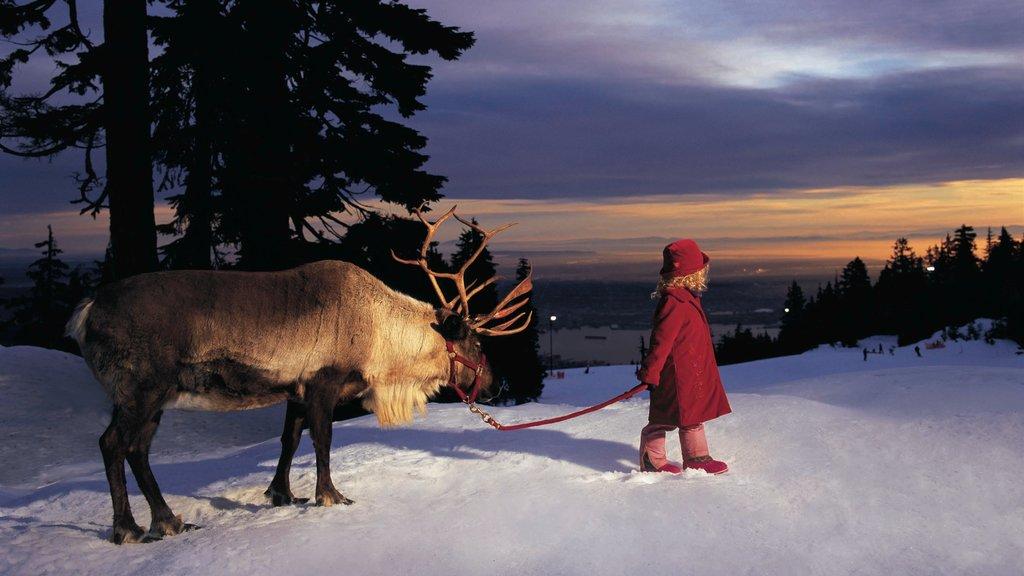 Montaña Grouse ofreciendo animales tiernos, nieve y una puesta de sol