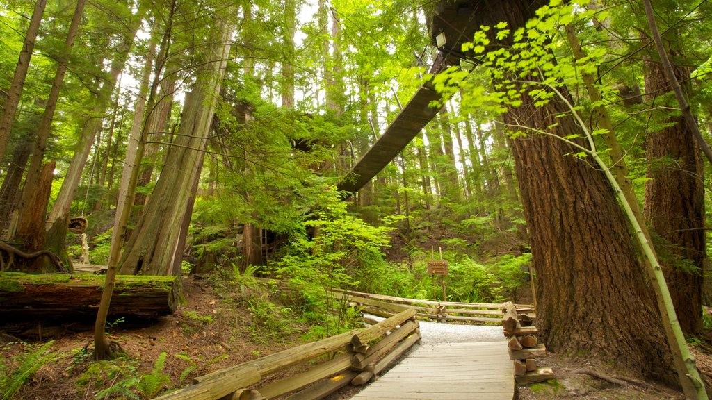 Capilano Suspension Bridge showing landscape views, a park and forest scenes