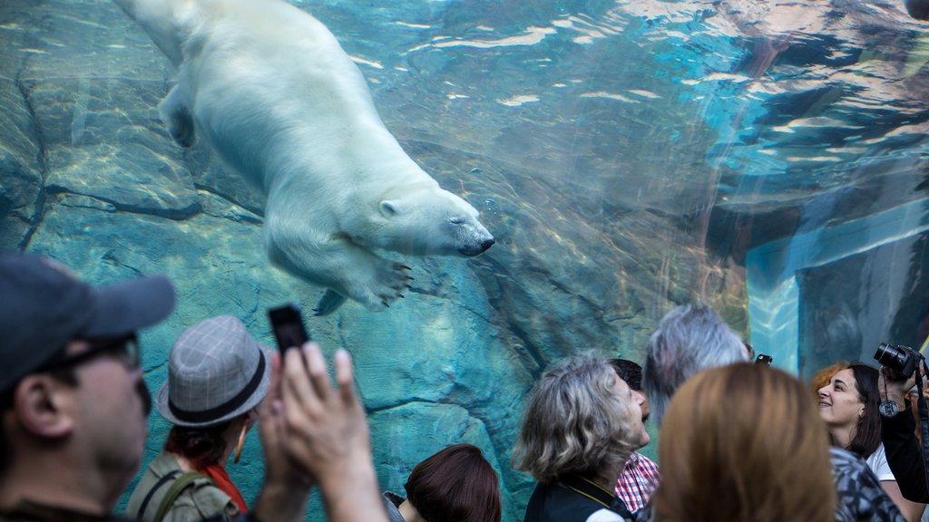 Winnipeg mostrando animales del zoológico, vistas interiores y animales terrestres