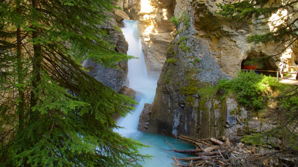 Johnston Canyon featuring a river or creek, a waterfall and a gorge or canyon