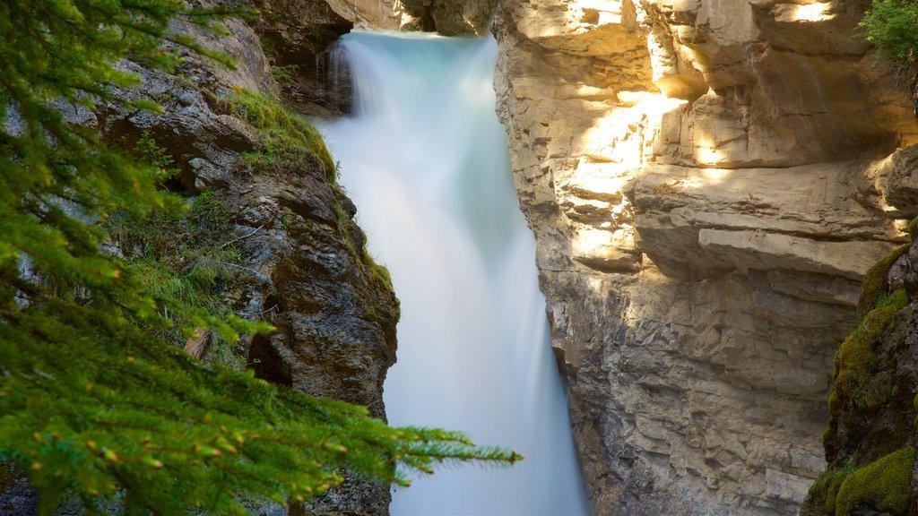 Johnston Canyon featuring a cascade