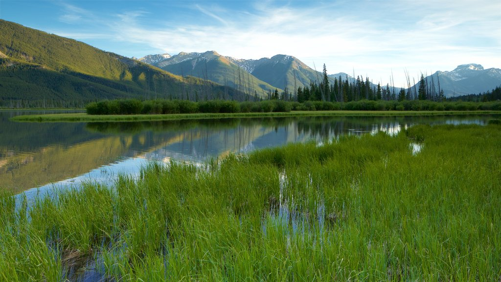 Banff which includes wetlands, a lake or waterhole and landscape views