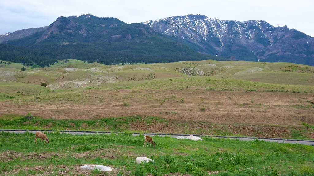 Gardiner que incluye animales terrestres, vistas de paisajes y escenas tranquilas