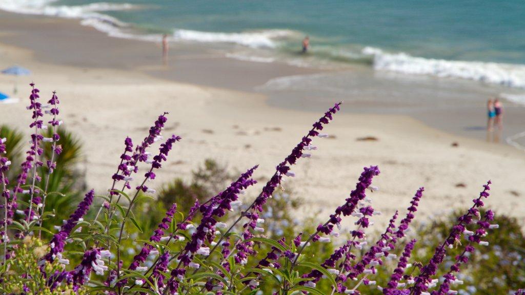 Laguna - South Beaches