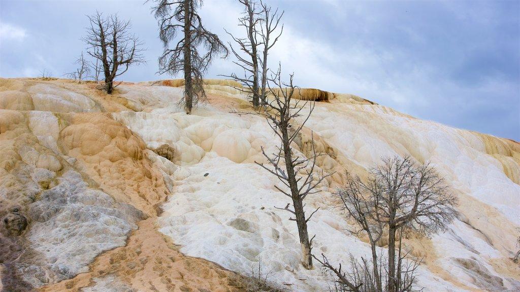 Mammoth Hot Springs ofreciendo una fuente termal