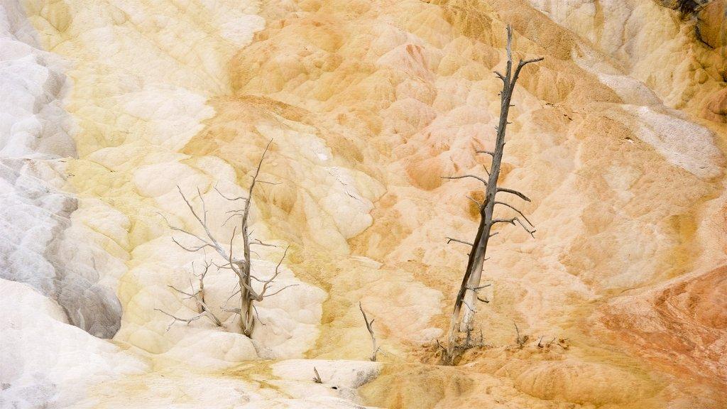 Mammoth Hot Springs que incluye una fuente termal