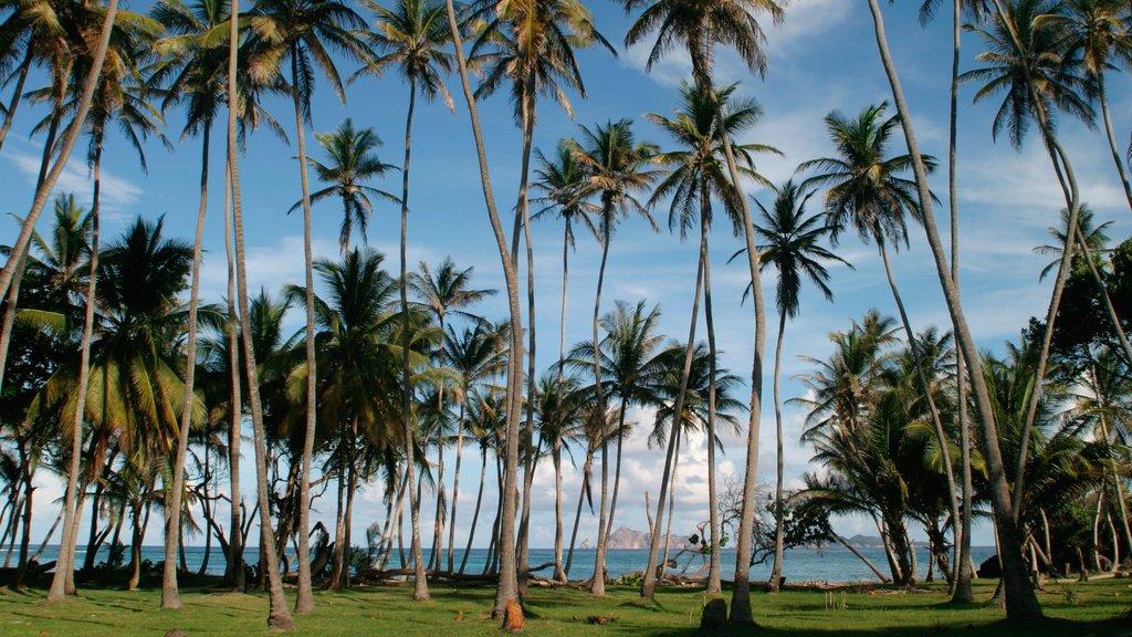 San Vicente y las Granadinas ofreciendo escenas tropicales, vistas generales de la costa y un parque
