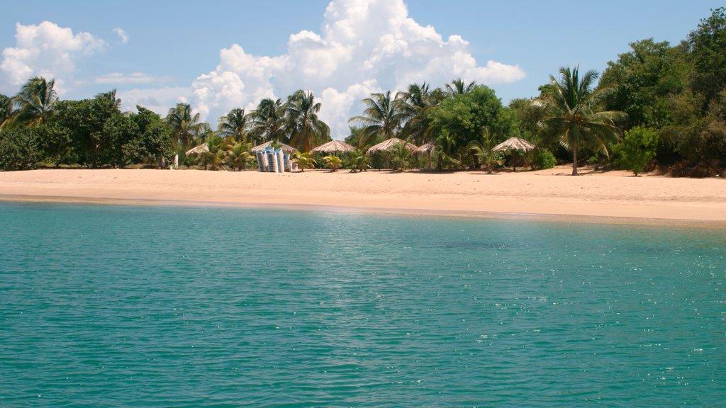 San Vicente y las Granadinas ofreciendo vistas generales de la costa, una playa y escenas tropicales