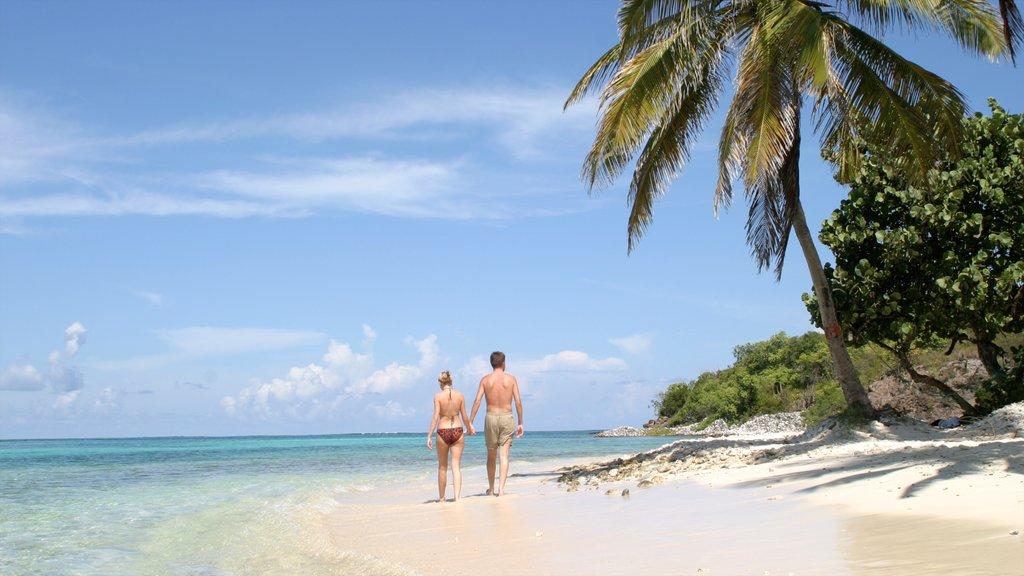 San Vicente y las Granadinas mostrando escenas tropicales, vistas generales de la costa y una playa