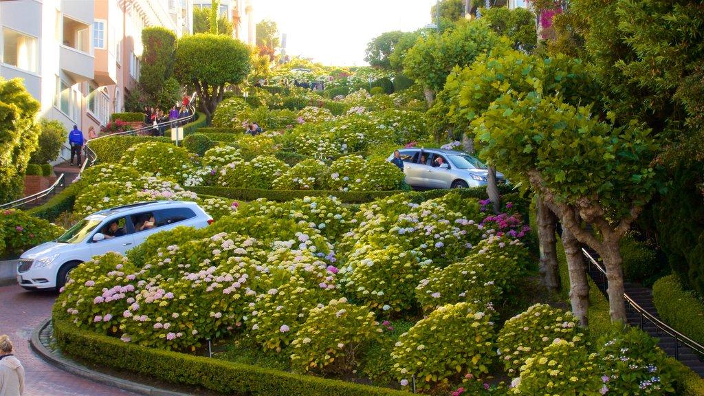 San Francisco que incluye un jardín, escenas urbanas y flores