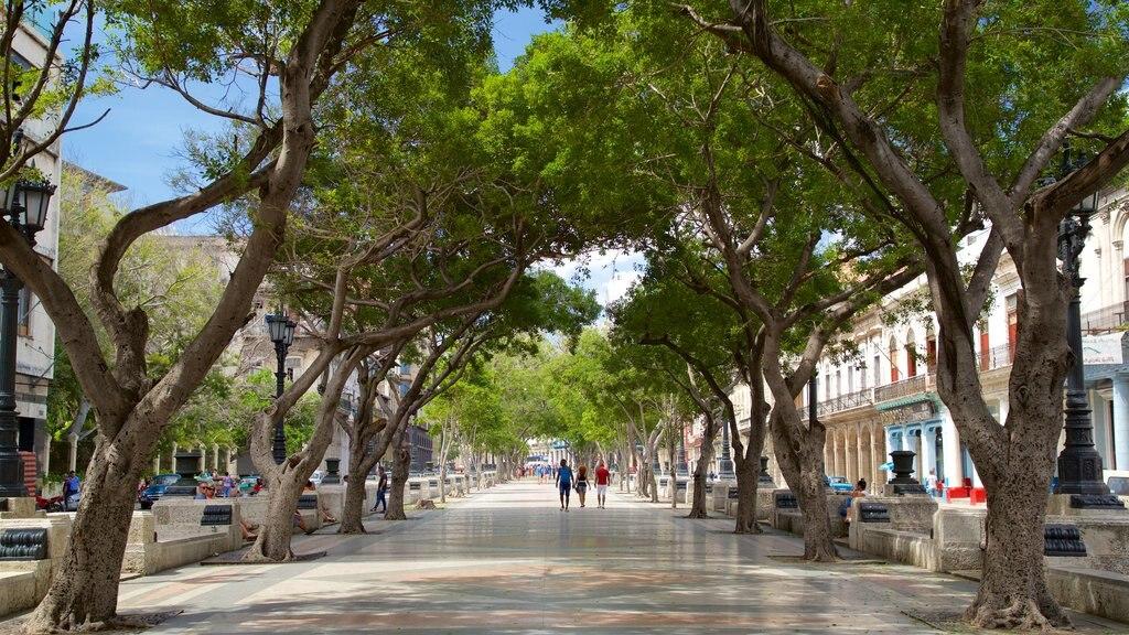 La Habana ofreciendo una ciudad, escenas urbanas y compras