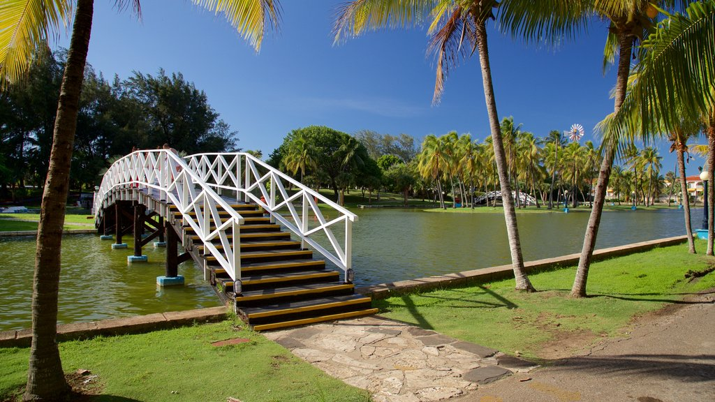 Josone Park showing a garden, a lake or waterhole and a bridge